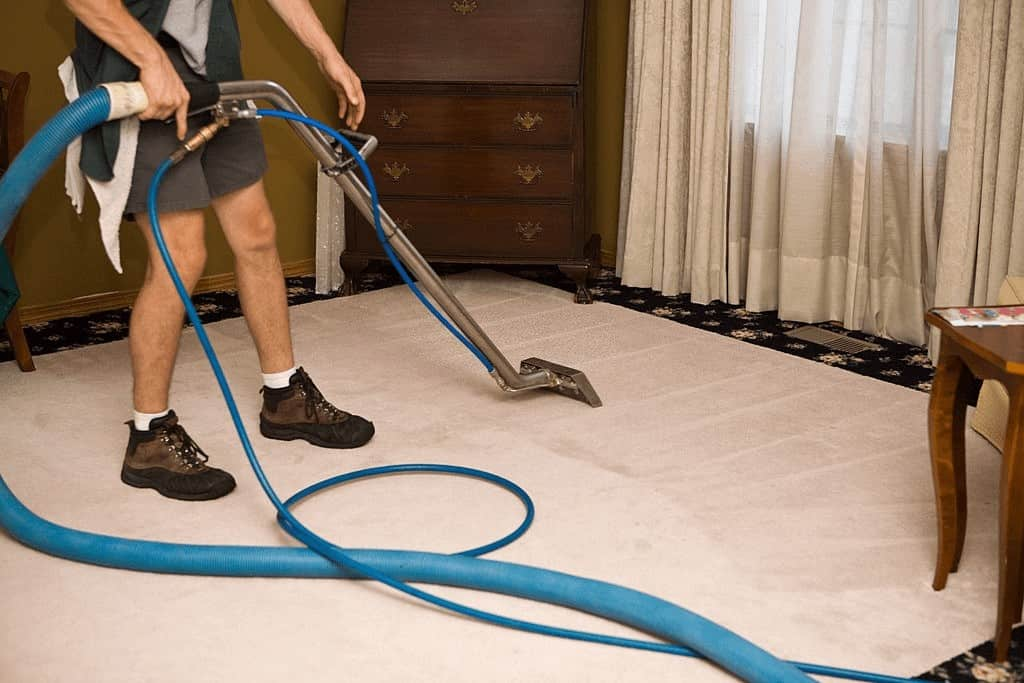 Does steam cleaning kill fleas