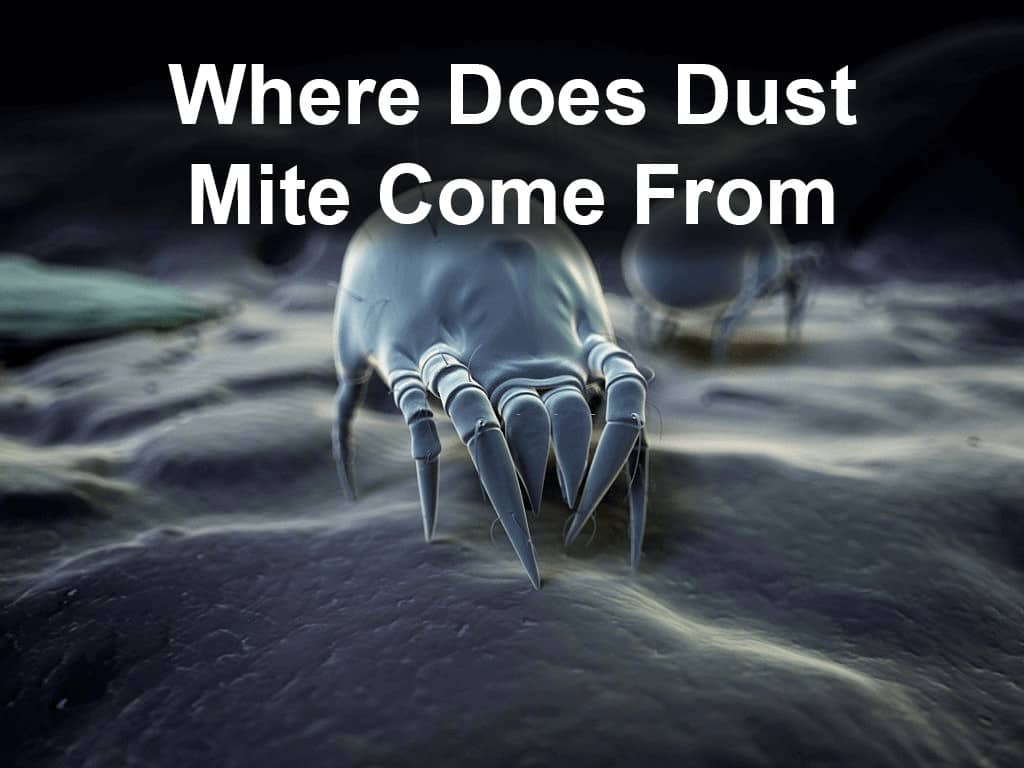 where does dust mite come from