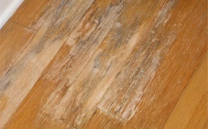 Signs Of Mold Under Hardwood Floors And