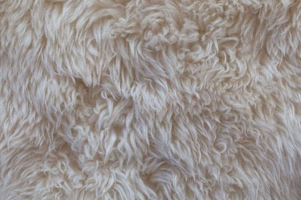 How to Stop a Wool Rug from Shedding
