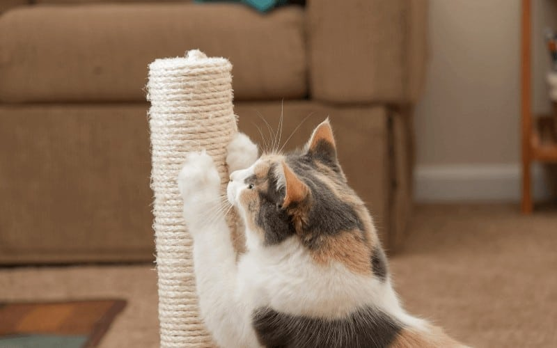 How To Keep Cats From Scratching Carpet