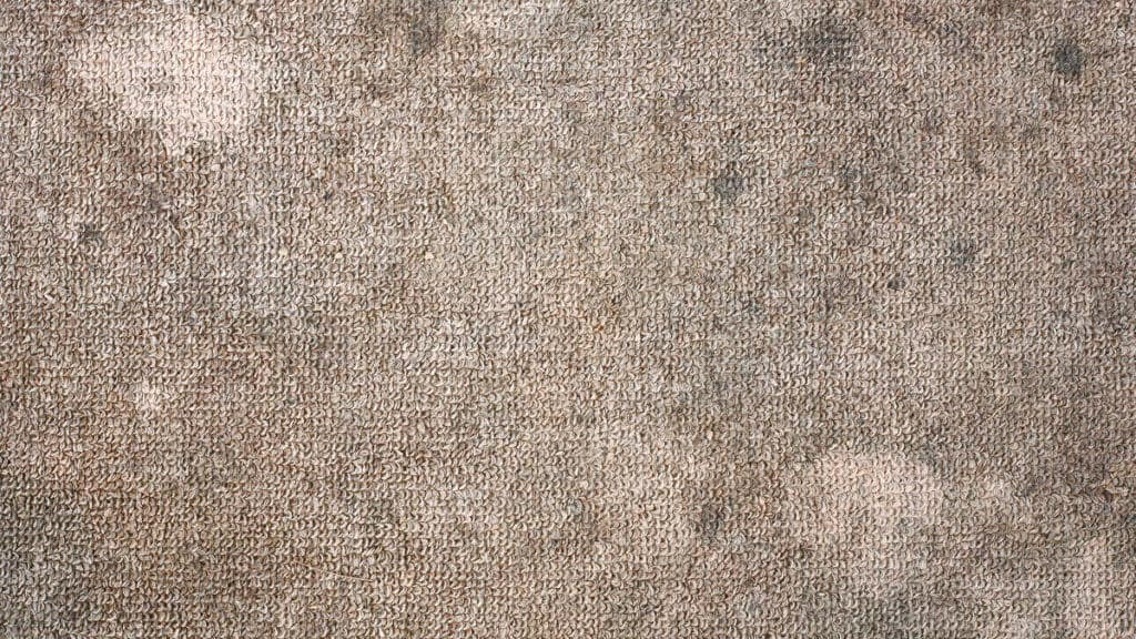 How To Get Rid Of Mildew Smell In Carpet