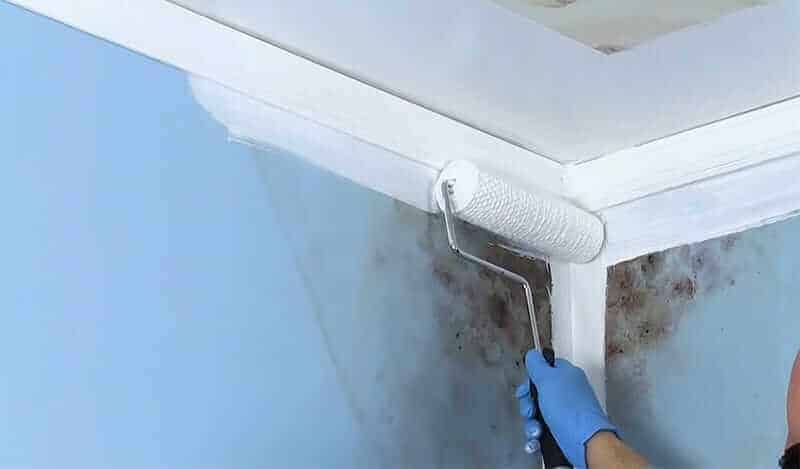 Best Mold and Mildew Resistant Exterior Paint