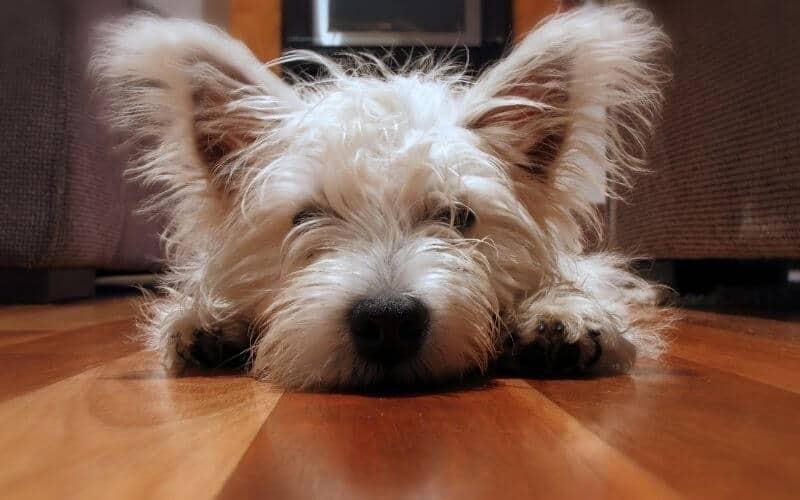 Dog Scratches on Hardwood Floors