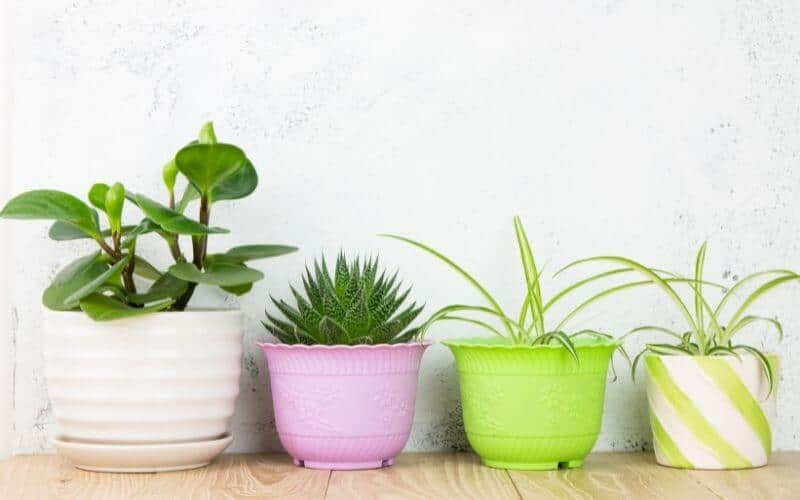 how to protect floor from potted plants