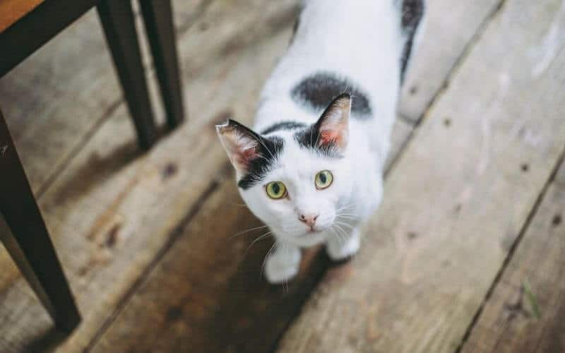 how to get rid of cat poop smell on floors