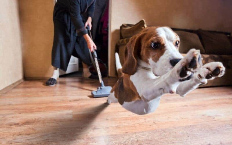 how to get rid of fleas on laminate flooring